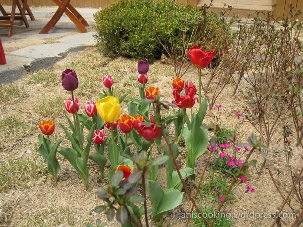 samcheongdong spring